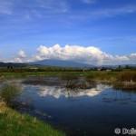 Orava wetland / oravská mokraď - Dušan Karaska