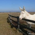 White Donkey - Zuzana Moravčíková