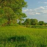 Wet meadow / mokrá lúka - Rudo Jureček