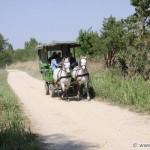 Sandeck - horse carriage
