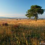 heathland - Rudo Jureček