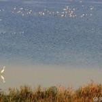 Waterbirds on fishponds / vodné vtáctvo na rybníkoch - Peter Orolín