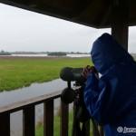 Pozorovanie vtáctva v NPR Senianske rybníky