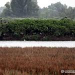 NPR Senianske rybníky