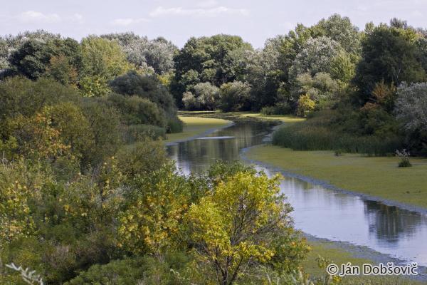 Quiet corners of Lake Tisza / Tiché zákutia na jazere Tisa