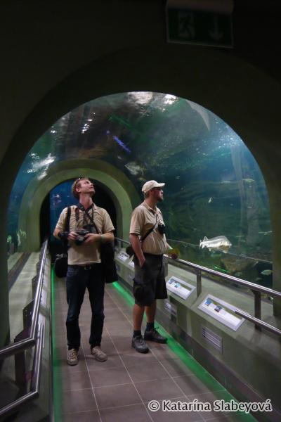 aquarium in ecocenter / akvárium v ekocentre