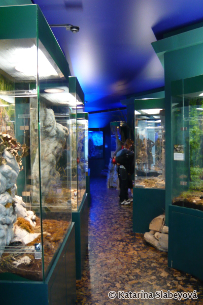Native fauna exposition / Expozícia domácej fauny