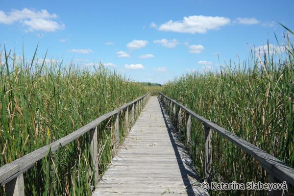 Sightseeing wooden path / Vyhliadkový drevený chodník