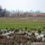 wet areas host waders and gulls / podmáčané miesta lákajú bahniaky a čajky - Zuzana Moravčíková