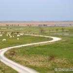 White donkeys - local breed / miestne plemeno - biele somáre - Zuzana Moravčíková