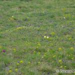 beautiful bloomong meadows were all around / všade boli krásne rozkvitnuté lúky - Zuzana Moravčíková
